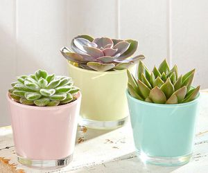 pastel and plants image
