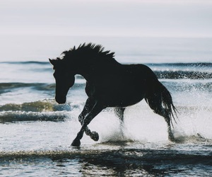 horse, black, and blue image