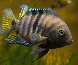 تفسير رؤية السمك في المنام صيد سمك في الحلم