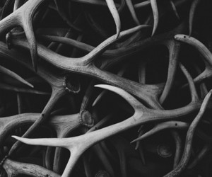 antlers, black and white, and deer image