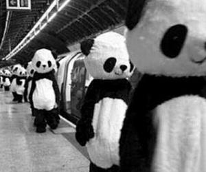 panda, black, and black and white image