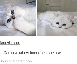 cats, funny, and tumblr image