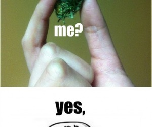 weed, funny, and lol image