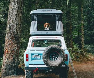 dog, travel, and adventure image