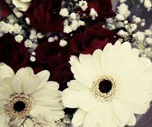 flowers, photo, and red and white image