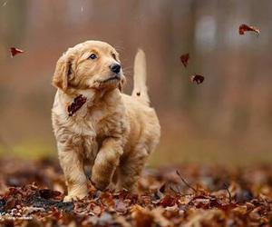 dog, autumn, and cute image