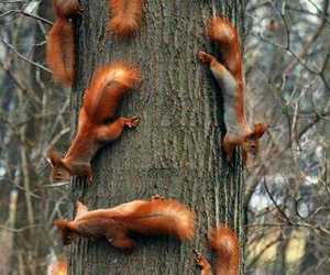 squirrel, animal, and tree image