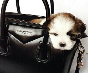 bag, Givenchy, and puppy image