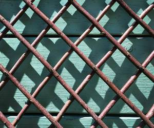cage, fence, and photography image
