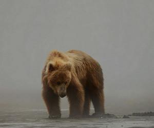 bear, animal, and fog image