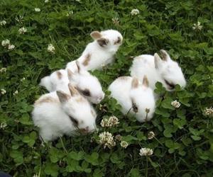 bunny, green, and animal image