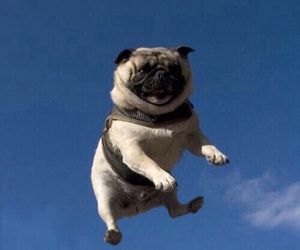 dog, pug, and sky image