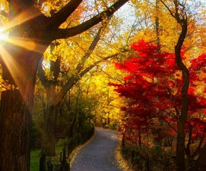 autumn, beautiful, and landscape image