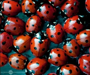 ladybug, photography, and red image