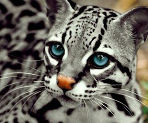 animal, cat, and eyes image