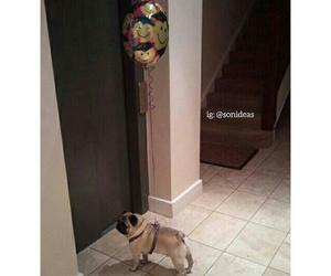 dog, pug, and gift image