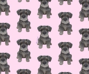dog, schnauzer, and wallpaper image