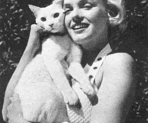 Marilyn Monroe, cat, and black and white image