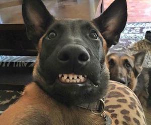 big dog, selfie w photo bomb, and check dem teefs image
