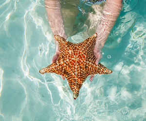 hands, ocean, and star image