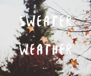 autumn, sweater weather, and cold image