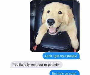 funny, couple, and dog image
