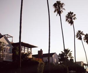house, summer, and palm trees image