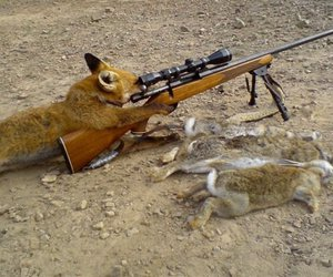 fox, hunting, and rabbit image