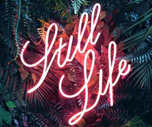 neon, life, and light image