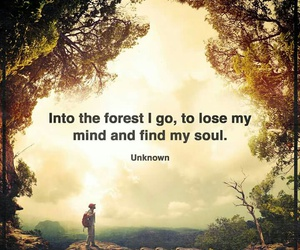 forest, quote, and soul image