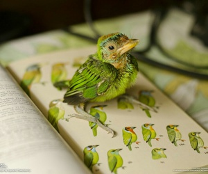 bird, book, and quotes image