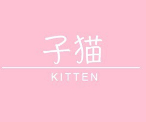 pink, kitten, and aesthetic image