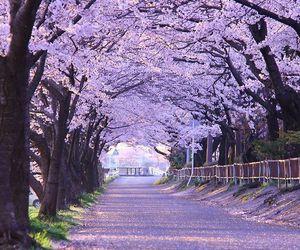 nature, purple, and tree image
