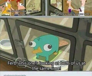 funny, perry, and lol image