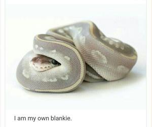 snake, ball python, and cute image