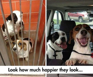 happy dogs smile image