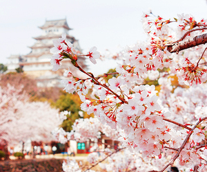japan, beautiful, and flowers image