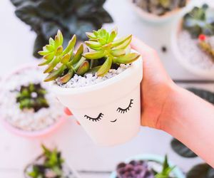 plants, cactus, and diy image