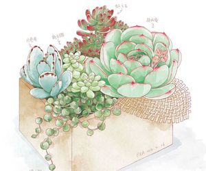draw, illustration, and succulent image