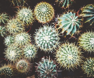 cactus, flower, and plant image