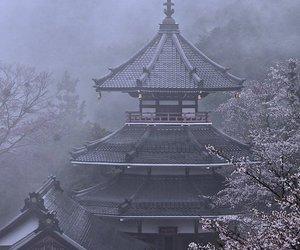 japan, asia, and sakura image