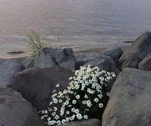 flowers, beach, and daisy image