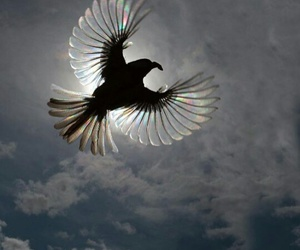 bird, animal, and freedom image
