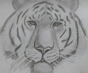 animal, draw, and art image