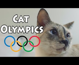 awesome, cats, and eyes image