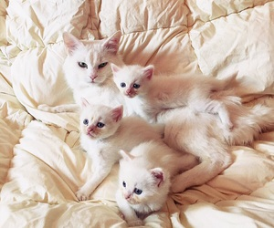 cats, family, and white image