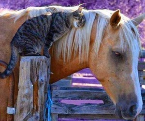 horse and cat image