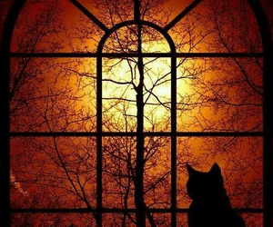 cat, window, and Halloween image