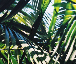 summer, tropical, and green image