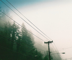 fog, lines, and telegraph pole image